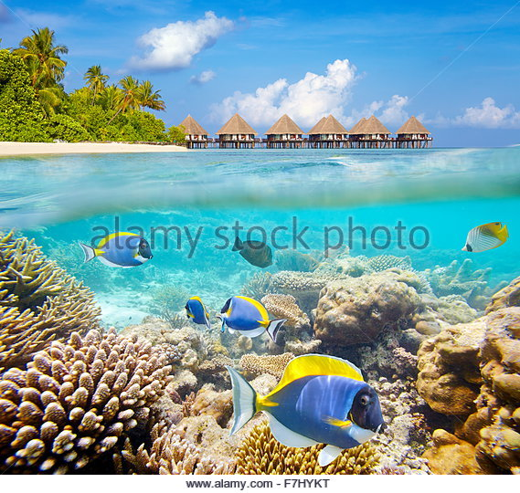 Maldives Islands, underwater view at tropical fishes and reef - Stock Image