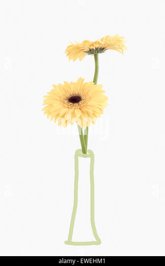 Two Gerberas in hand drawn Vase - Stock Image