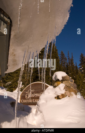 Fairmont Chateau Lake Louise Alberta Canada  winter season icicles frozen ice spikes hangs on tree branch limb bright - Stock Image