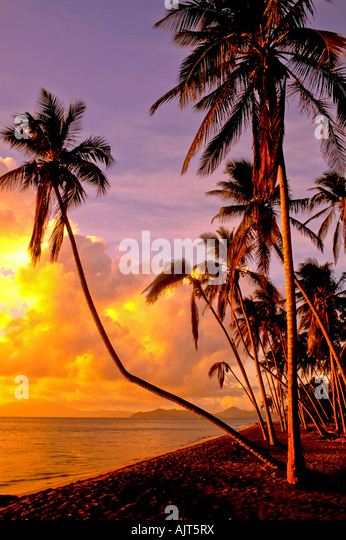 Pinney's Beach, Nevis, with idyllic tropical setting of palm trees and placid calm water, Pinney's Beach, - Stock Image