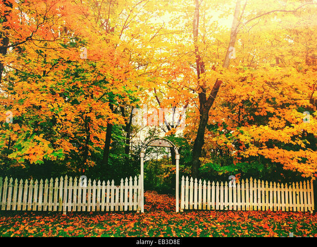 USA, Indiana, Zionsville, Boone County, White fence and yellow trees - Stock Image