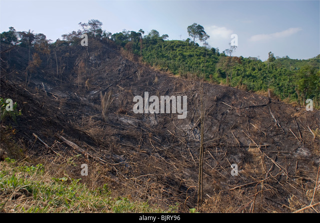 RAINFOREST DESTRUCTION - rainforest burnt and cut for cattle ranching. Barinas, Venezuela. - Stock Image