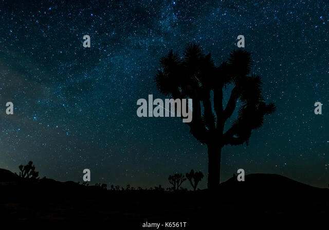 Stars Over Silhouette of Joshua Tree with glowing milky way - Stock Image