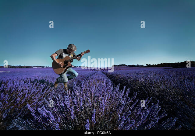 Man playing guitar in lavender field - Stock Image