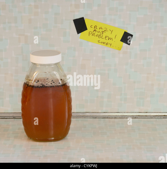 Jar of honey with ant problem sign - Stock Image