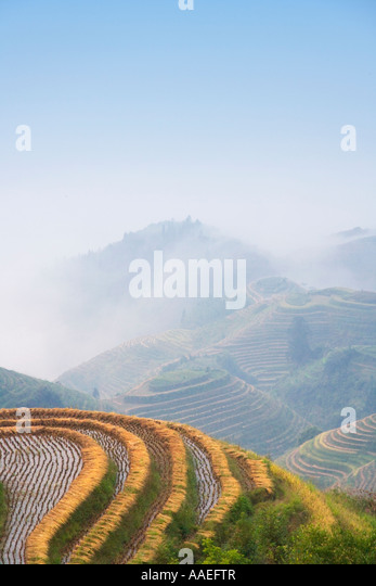 Landscape of rice terraces in the mountain in mist at harvest time, Longsheng, Guangxi, China - Stock Image