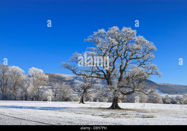 Rural countryside Brecon Beacons Powys Wales in winter - Stock Image
