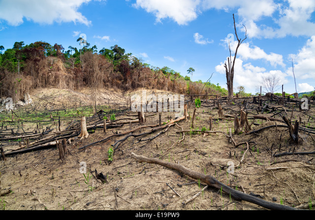 Deforestation in El Nido, Palawan - Philippines - Stock Image