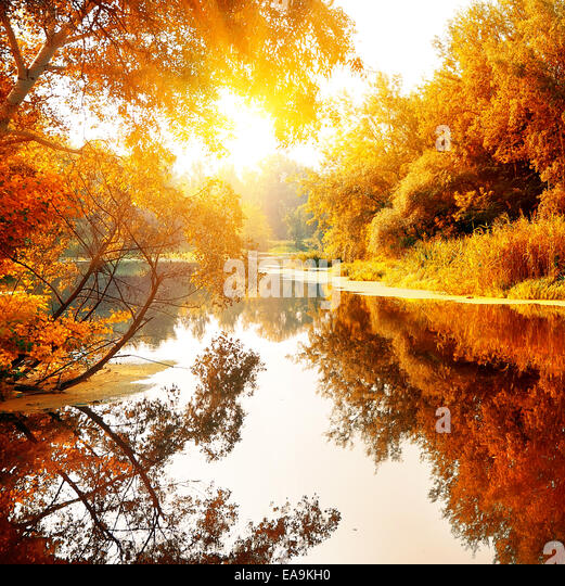 River in a delightful autumn forest at sunny day - Stock Image