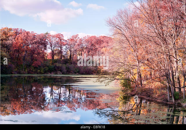 USA, Illinois, LaSalle County, Starved Rock, Colorful autumn - Stock Image