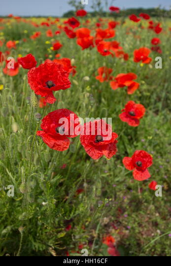 pictures of wildflowers stock photos amp pictures of
