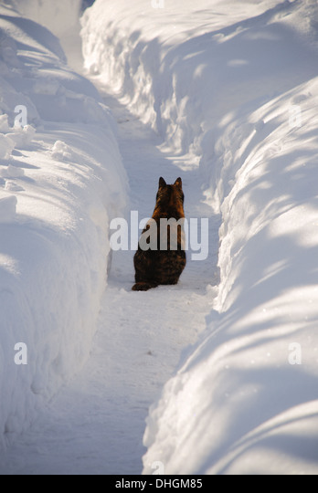 Cat sitting in a snow trail - Stock Image