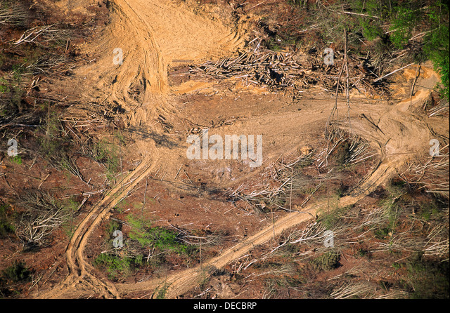 AERIAL VIEW OF TRACT OF FORESTRY LAND AFTER DEFORESTATION - Stock Image