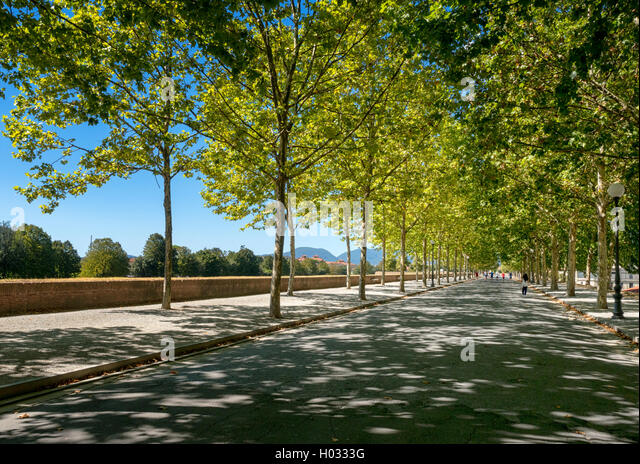 The old, tree-lined walls of the city of Lucca, Tuscany, Italy - Stock Image