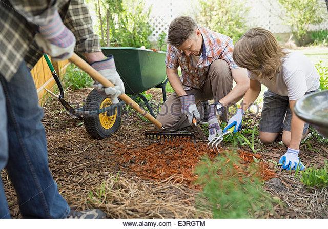 Multi-generation family spreading bark dust in backyard - Stock Image