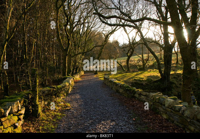 A tree lined track near Beddgelert, Snowdonia, North Wales, UK - Stock Image