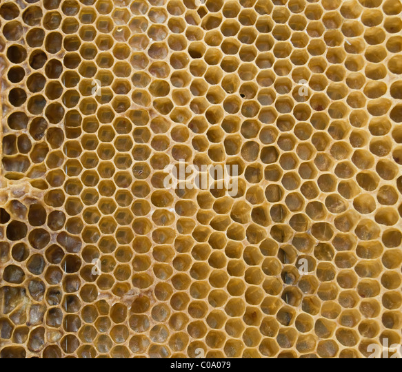 bee honeycombs are taken off a large plan - Stock-Bilder
