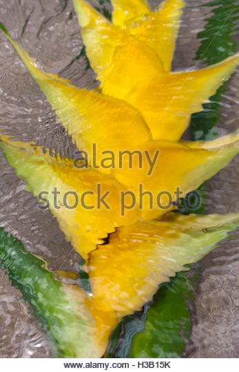 yellow heliconia flower - Stock Image