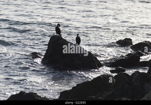 a poetic silhouetted picture of two birds on a rock by the sea, Palma de Mallorca, Spain, seaside, tourism, holidays, - Stock Image