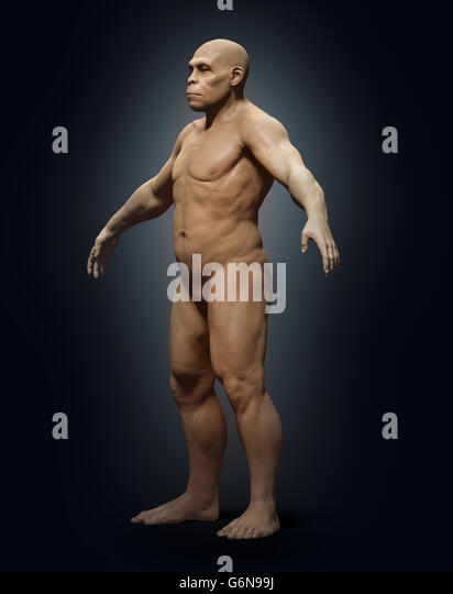 A 3D rendering of a homo sapiens ancestor - homo erectus - Stock-Bilder