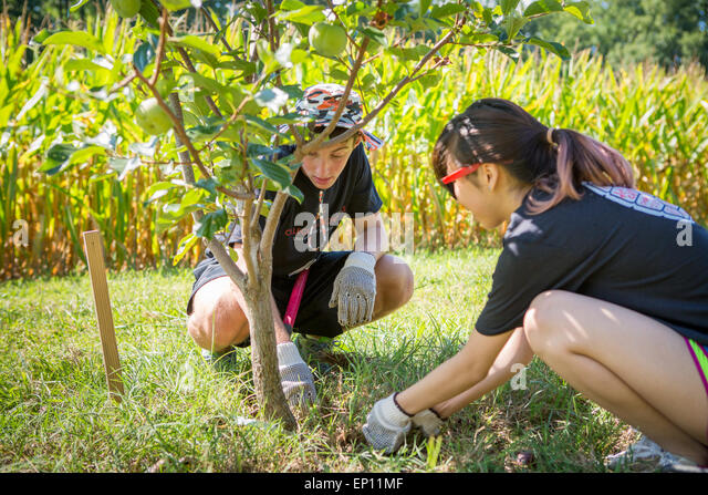 Two young adults planting a tree. - Stock-Bilder
