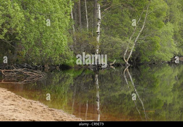 Reflection at Loch Garten, Scotland. - Stock Image