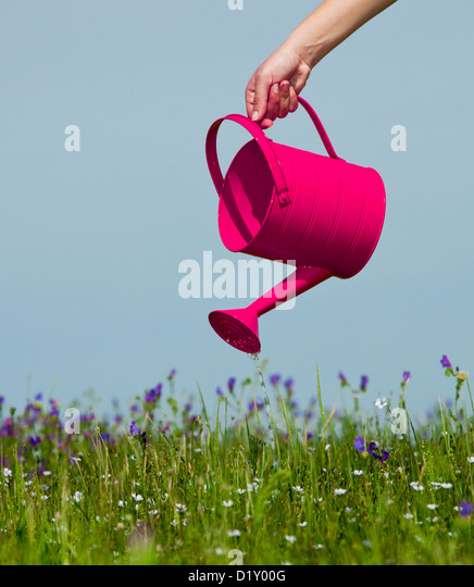Female hand holding a water can and watering the flowers - Stock-Bilder