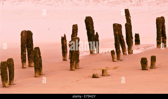Decayed Wooden Pilings In A Beach Revealed at Low Tide - Stock Image
