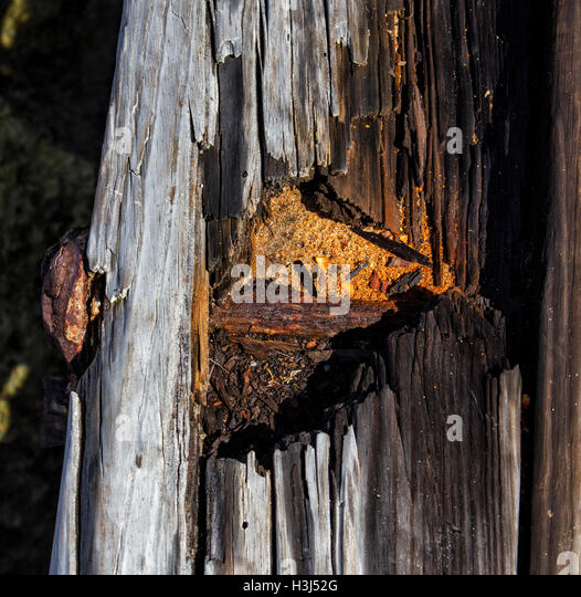 Wind, rain and sun have weathered the decking of the Hillsboro Inlet jetty as seen by this rusted steel bolt and - Stock Image