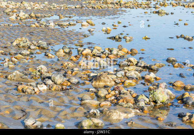 Tide out on a shingle beach covered with stones with puddles leftover from the sea. - Stock Image