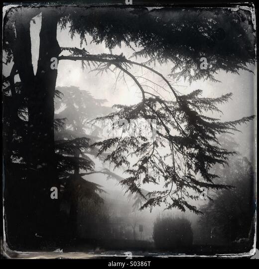 Trees in the fog on winter - Stock-Bilder