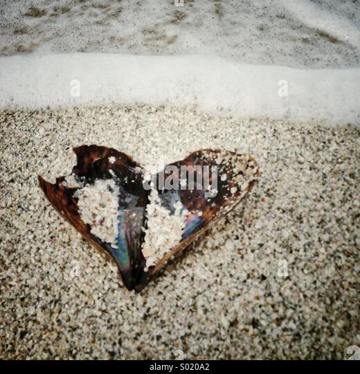 Heart shaped open shell on the beach. - Stock-Bilder