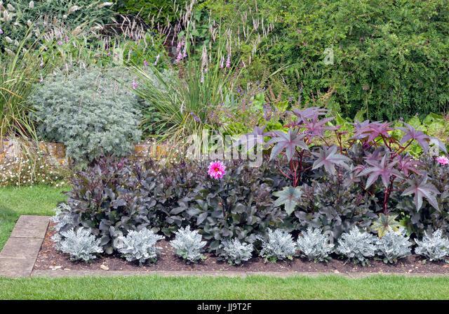 Evergreen shrub garden uk stock photos evergreen shrub for Tall flowering shrubs