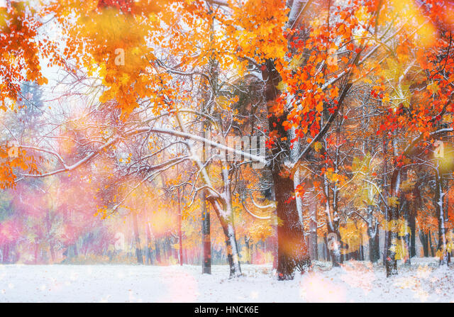 October mountain beech forest with first winter snow,  - Stock Image