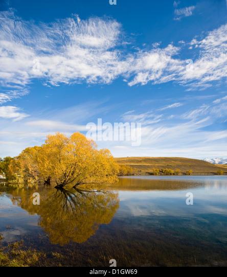 Golden autumn tree reflection in still morning water, Lake Alexandrina, Southern Lakes, Otago Region, South Island, - Stock Image