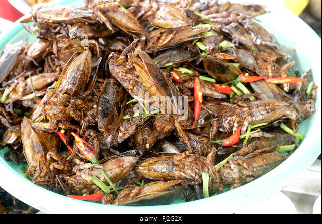 https://n7.alamy.com/zooms/d106408ac1dc4bd187857ad90ea78504/fried-cockroaches-at-a-roadside-stand-in-cambodia-fj2g2x.jpg