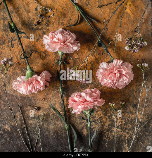 Carnations on the brown stone table square - Stock Image