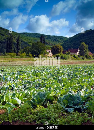 A view of fertile farmland in the Dordogne. - Stock Image