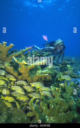 Keys Diver Snorkel Tours Key Largo Fl Usa