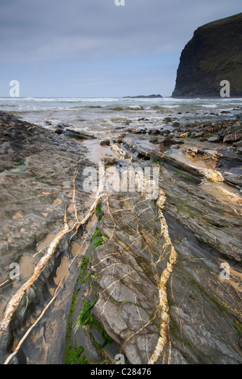 Coastal Geology at Crackington Haven, Cornwall, UK, showing quartz veins in the rock, March 2010. - Stock Image
