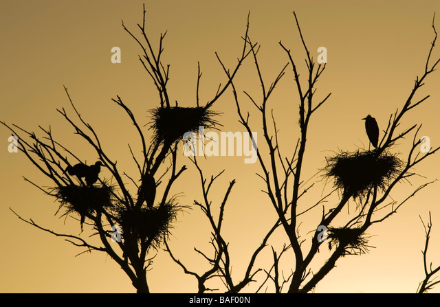 Birds nesting - Tres Rios Wetlands - Phoenix, Arizona - Stock Image