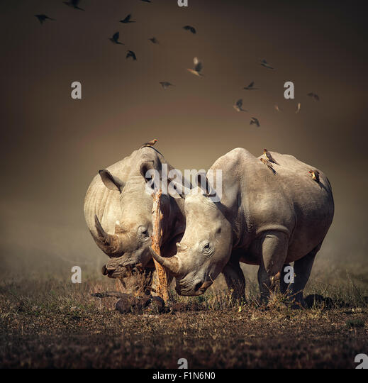 Two white Rhinoceros in the field with birds flying (Digital art) - Stock Image