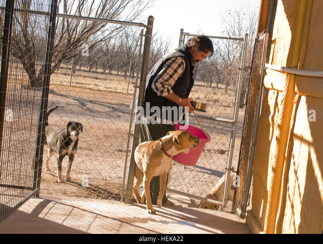 Howl A Day Inn Dog Boarding And Training El Paso