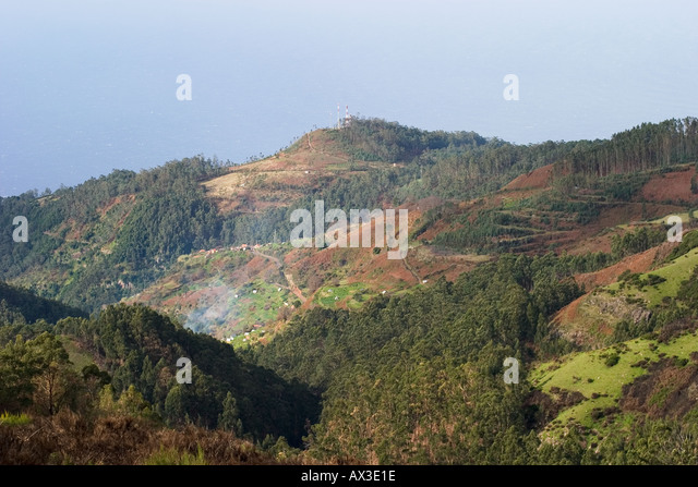 Paul da Serra deforestation eucalyptus forest Madeira - Stock Image
