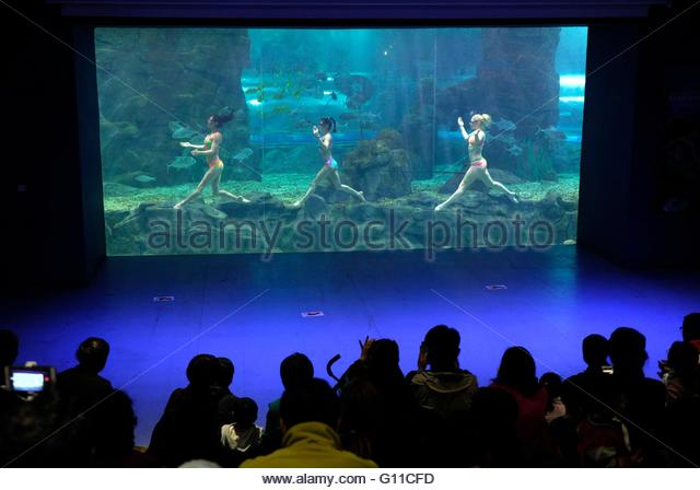Changchun, Jilin, China. 07th May, 2016. The 3 beautiful mermaids from Russia perform underwater ballet at a aquarium - Stock Image