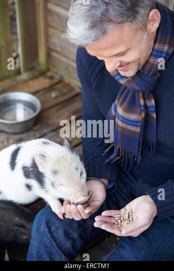 Mature Man Feeding Pet Micro Pig - Stock-Bilder