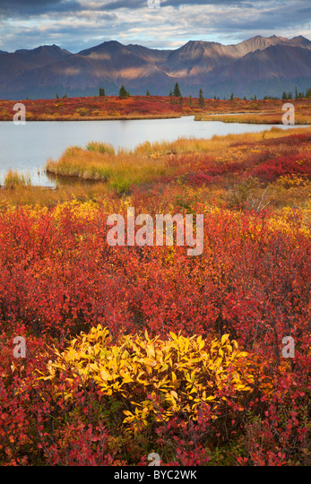 Denali Highway, Alaska. - Stock-Bilder