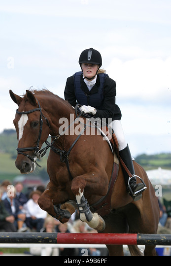 Horse and ride at show jumping competition - Stock Image