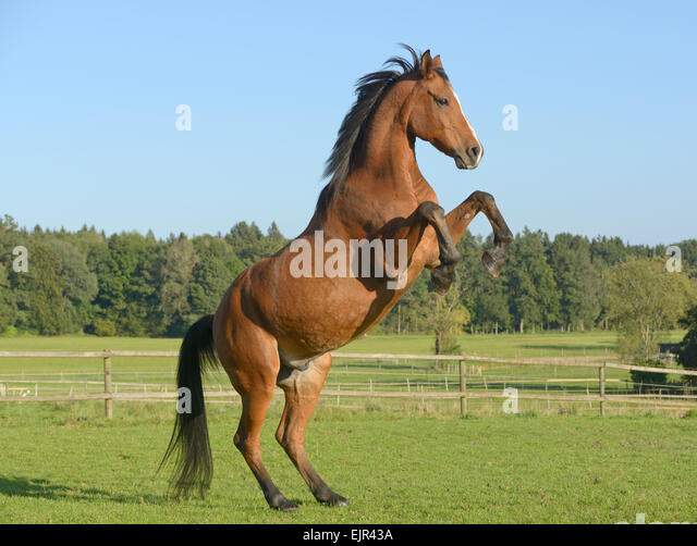 Horse running side view