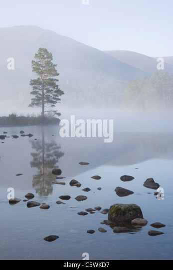 Loch an Eilein on spring morning, Rothiemurchus Forest, Cairngorms National Park, Scotland, Great Britain. - Stock-Bilder